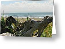 Old Driftwood Greeting Card by Deahn      Benware