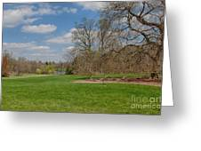 Old Elm Haverford College Greeting Card by Kay Pickens