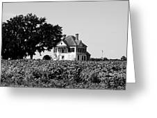 Old Farmhouse Surrounded By Cotton Greeting Card