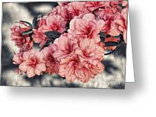Old Fashion Azalea Greeting Card