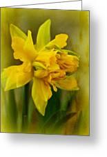 Old Fashioned Daffodil Greeting Card