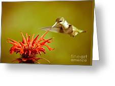 Old Fashioned Hummingbird Greeting Card