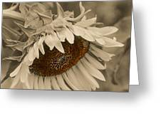 Old Fashioned Sunflower Greeting Card