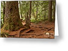 Old Growth Cedar At Cheakamus Lake Greeting Card