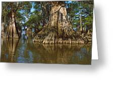Old-growth Cypresses At Lake Fausse Greeting Card