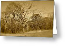 Old Haunted Tree In Sepia Greeting Card