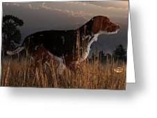 Old Hunting Dog Greeting Card