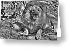 Old King In Black And White Greeting Card