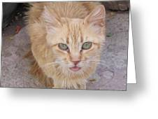 Old Kitten Greeting Card