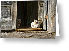 Old Knox Church Cats Greeting Card