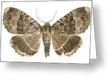 Old Lady Moth Greeting Card