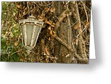 Old Lamp Hanging On Tree  Greeting Card