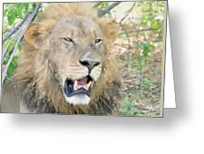 A  Lion Talks Greeting Card