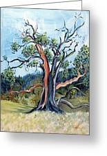Old Madrone Tree In November Painting By Asha Carolyn Young