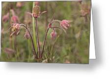Old Man's Beard Greeting Card by Gerald Murray Photography