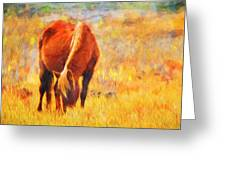 Old Mare Greeting Card