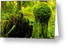 Old Mossy Stump Greeting Card