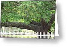 Old Oak Greeting Card by Kevin Croitz