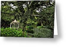 Old Oak Tree Greeting Card