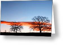 Old Oak Trees On Old Humboldt Road Greeting Card