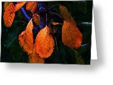 Old Orange Leaves Greeting Card