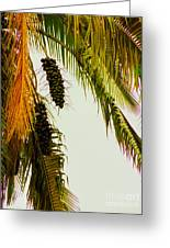 Old Palm Greeting Card