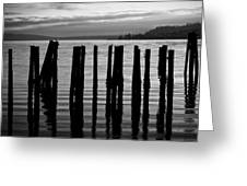 Old Pilings On Puget Sound - Tacoma - Washington - August 2013 Greeting Card