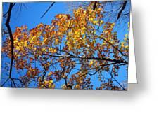 Old Rag Hiking Trail - 121218 Greeting Card