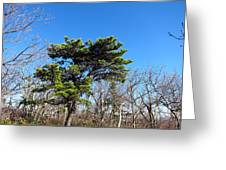 Old Rag Hiking Trail - 121242 Greeting Card by DC Photographer