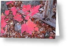Old Rag Hiking Trail - 121259 Greeting Card