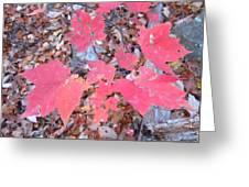 Old Rag Hiking Trail - 121261 Greeting Card