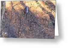 Old Rag Hiking Trail - 121264 Greeting Card