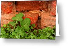Old Red Wall Greeting Card