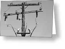 Old Telephone Pole Greeting Card
