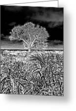 Old Texas Fields Greeting Card