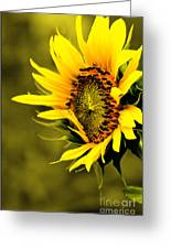 Old Time Sunflower Greeting Card