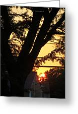 Old Tree And Sunset Greeting Card
