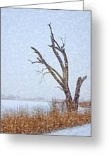 Old Tree In Winter Greeting Card