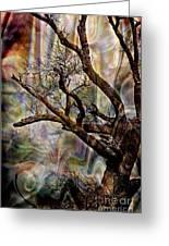 Old Tree Photoart Greeting Card