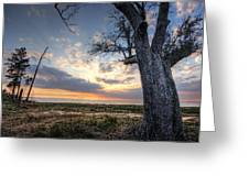 Old Tree Sunset Over Oyster Bay Greeting Card