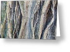 Old Tree Wrinkles Greeting Card