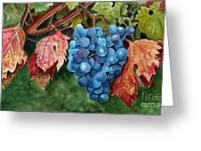 Old Vine Zinfandel Greeting Card