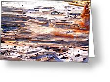 Old Weathered Log On The Sea Shore Greeting Card
