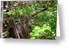 Old Wheelbarrow In The Weeds Greeting Card