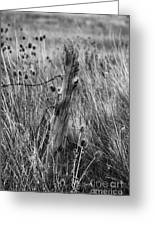 Old Wooden Fence Post In A Field Greeting Card