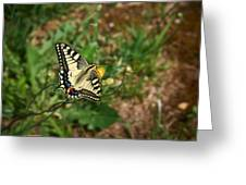 Old World Swallowtail. Montorfano. Cologne Greeting Card