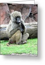 Olive Baboon Greeting Card