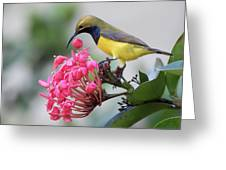 Olive-backed Sunbird Male With Flower Greeting Card