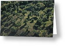 Olive Farmland In Spain Greeting Card