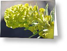 Olive Fluorescence Greeting Card